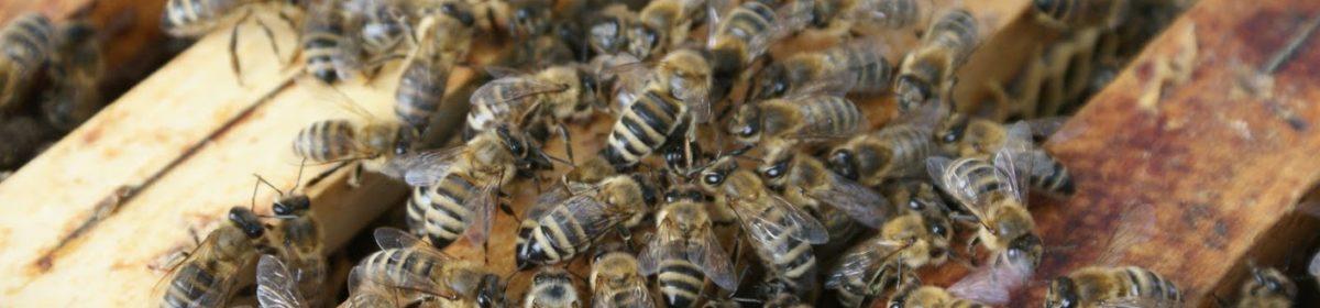 Včelaři Mladošovice